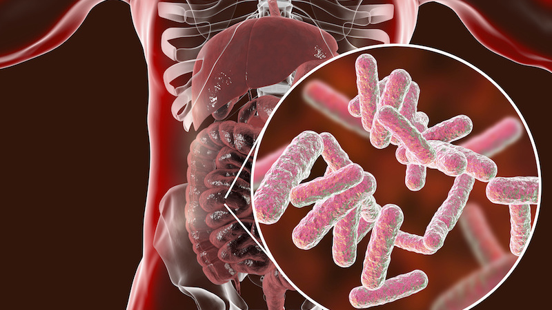 KTN Workshop Report on the Exploitation of Microbiome – Now Available