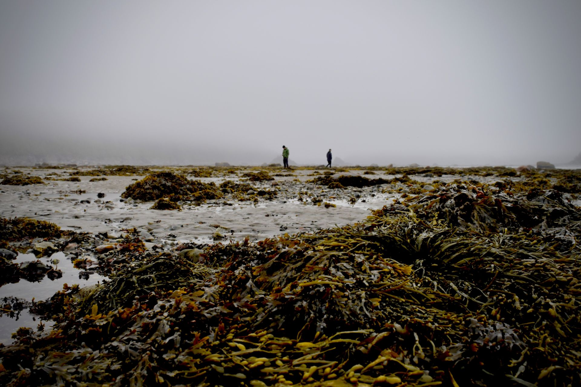 SWBIO PhD position: seaweed diseases